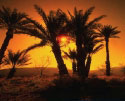 Palm-Desert-Photos.jpg