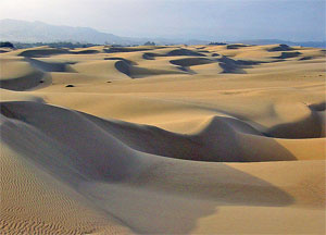Drawing Crowds From Around The State Pismo Dunes Or Oceano Vehicular Recreation Area As It Is Officially Named A Favorite Weekend